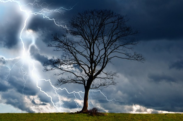 tree and storm 2, courtesy George Holden